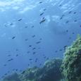 [Imatge d'un banc de castanyoletes al fons marí de Tossa de Mar. Foto: Albert Corbacho] En motiu del dia 5 de juny, dia mundial del medi ambient, el monogràfic ecòpolis […]